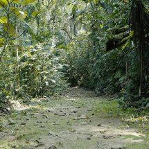 corredor-ecologico-mogiano